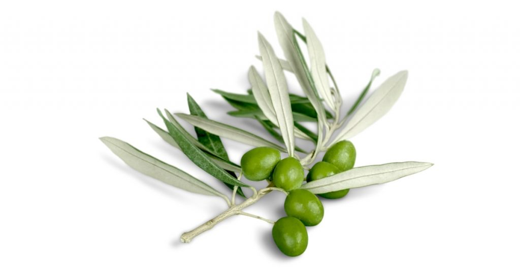 Olives for beautiful skin